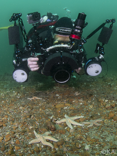 A diver photographing common seastars in Kingmere MCZ