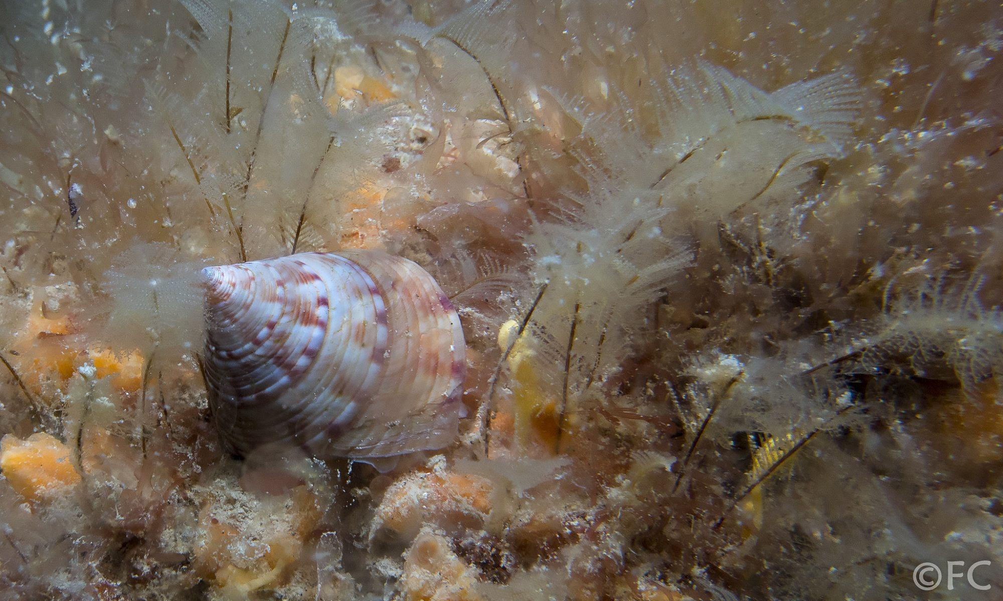 Kingmere Marine Conservation Zone
